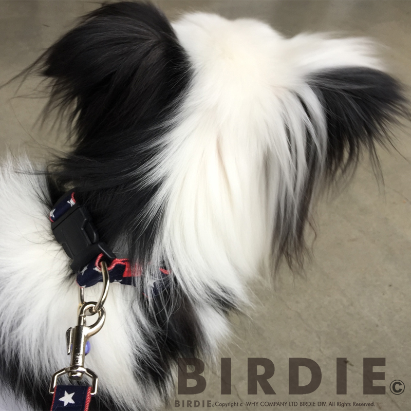 L スターデニムカラー【BIRDIE(バーディ)中・大型犬用ワンタッチバックル首輪】