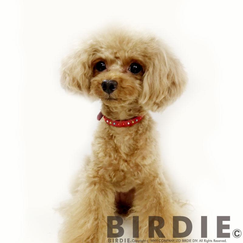 【10%OFF!】18 カラフルビーズカラー【BIRDIE超小型犬・猫用革首輪】
