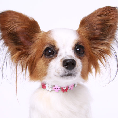 20 タリアカラー【BIRDIE小型犬・猫用革首輪】