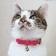 CATアリーナカラー【BIRDIE猫用首輪】