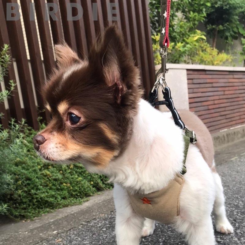 S スターデニムリード【BIRDIE小型犬リード】