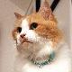 CATフェアリーカラー【BIRDIE猫用首輪】