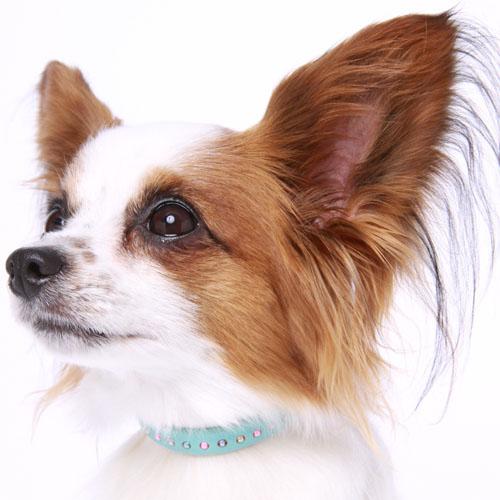 21 パールビーズカラー【BIRDIE小型犬・猫用革首輪】