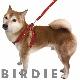 L アイフレックスハーネス【BIRDIE(バーディ)中・大型犬ワンタッチバックル足入れタイプ胴輪】