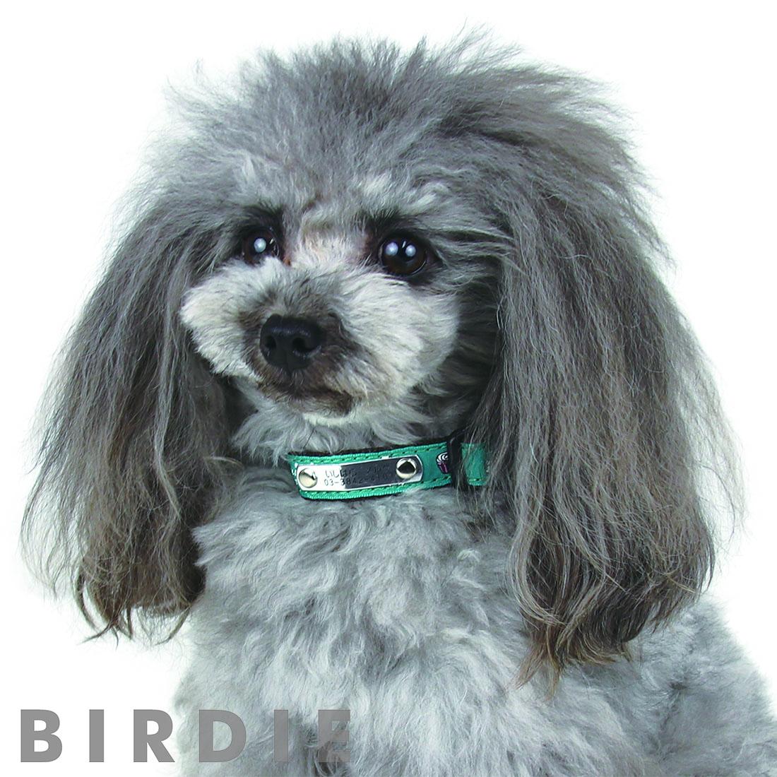S ティータイムIDカラー【BIRDIE小型犬迷子防止首輪】
