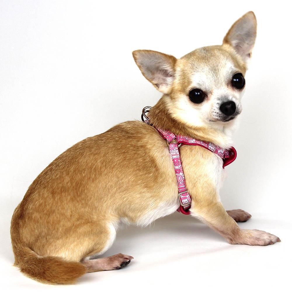 モノグラムハーネス SS【BIRDIE(バーディ)超小型犬用ワンタッチバックルハーネス】