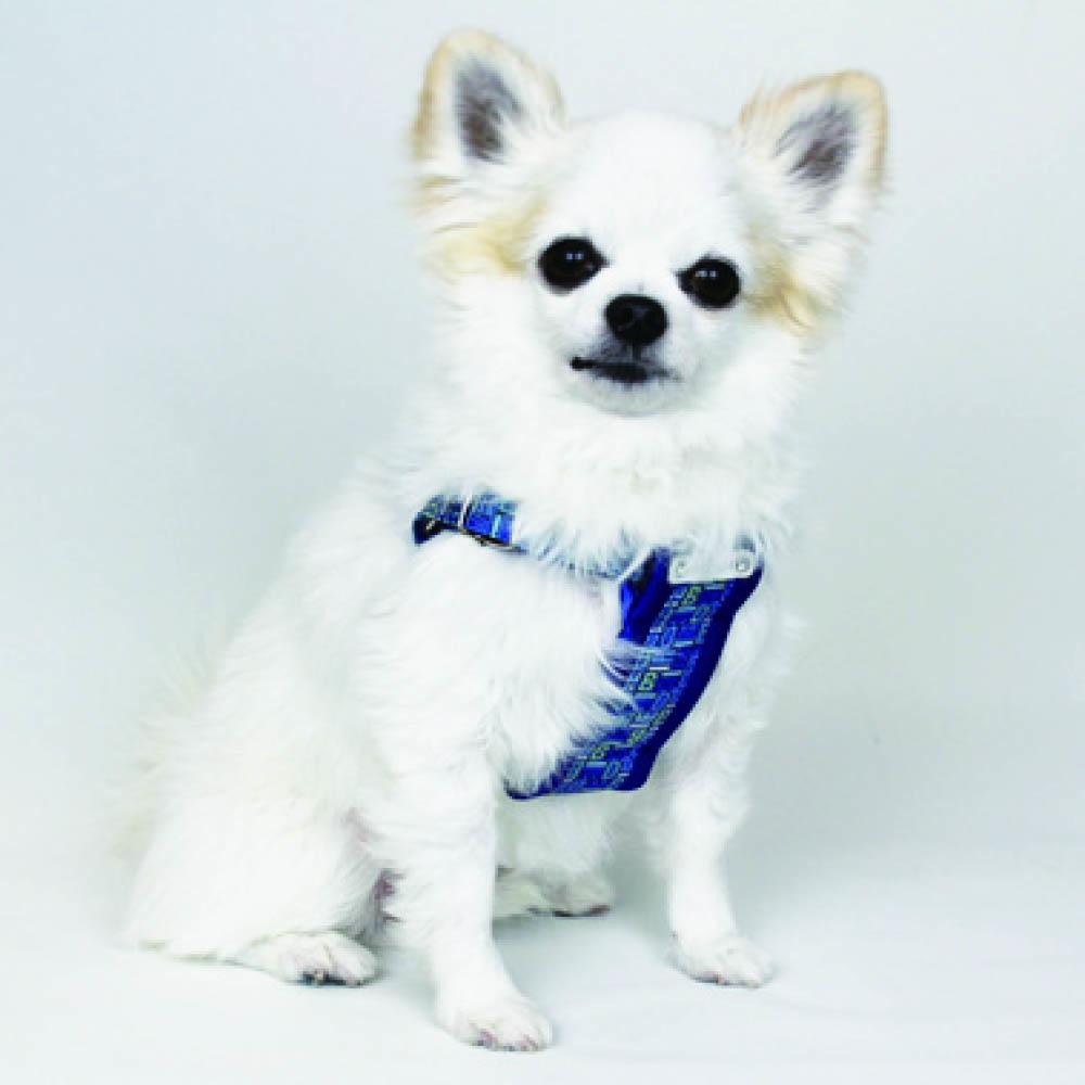 モノグラムハーネス S【BIRDIE(バーディ)小型犬用ワンタッチバックル胴輪】