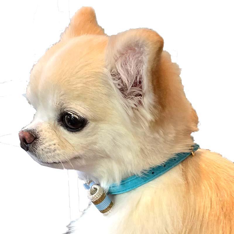 25 スープルリボンカラー【BIRDIE小型犬ウルトラスエード首輪】