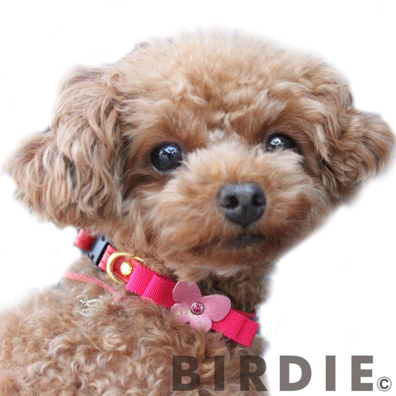 Sレザープチパピヨンカラー【BIRDIE小型犬・猫用ワンタッチバックル本革首輪】