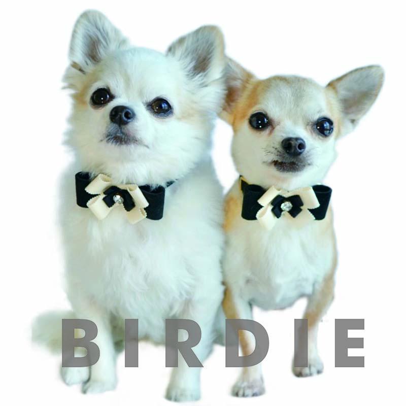 S リンバーフラワーカラー【BIRDIE小型犬ウルトラスエード首輪】