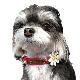 28 マーガレットレザーIDカラー【BIRDIE小型犬用本革迷子首輪】