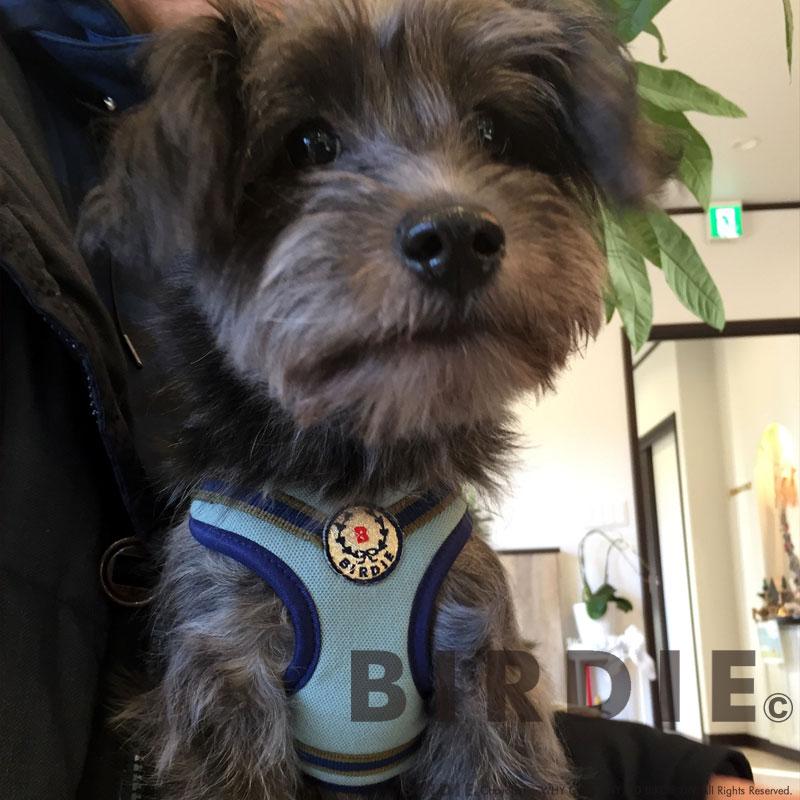 SS ローレルストライプソフトハーネス【BIRDIE(バーディ)小型犬用胴輪】