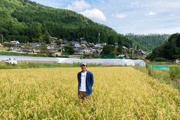 京の無肥料・自然栽培米 コシヒカリ玄米5kg[京都府:農園negu]【2020年度米】【v4500】