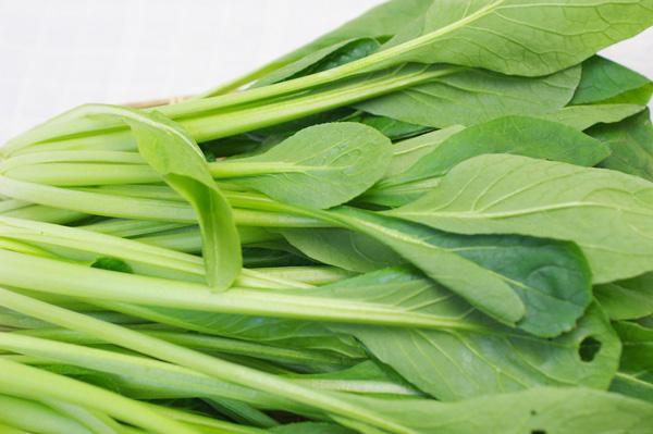 【無肥料・自然栽培】小松菜 [和歌山県:辻本悠二さん]【v400】