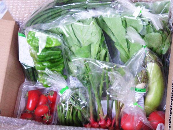 【無肥料・自然栽培】旬のお野菜・果物のお任せセットのスポット購入※除外作物登録可