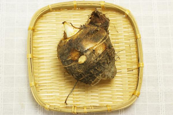 【無肥料・自然栽培】海老芋の親芋 約500g【京都府:RedRice自然農園】