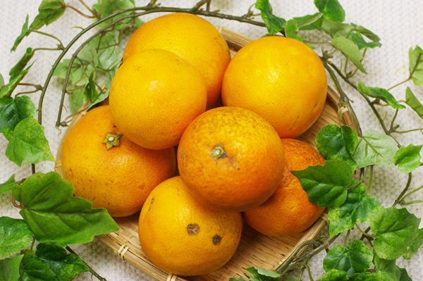 【無肥料・自然栽培】オレンジと赤・甘みと酸味のコントラストが刺激的な『ブラッドオレンジ(タロッコ)1kg』[愛媛県:冨田農園]【v1000】