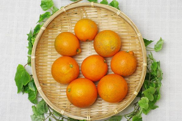 【無肥料・自然栽培】ネーブルオレンジ1kg[広島県:国広自然栽培農園]【v1000】