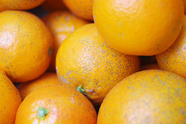 【無肥料・自然栽培】ネーブルオレンジ5kg[広島県:国広自然栽培農園]【v5000】