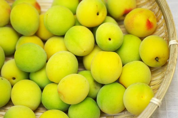 【無肥料・自然栽培】古城の青梅1kg 喉の乾きを癒やすキレのある梅酒や梅シロップに[和歌山県:梅の里自然農園]