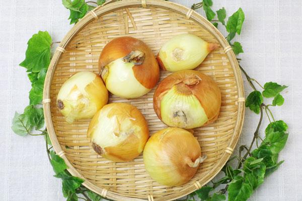 【無肥料・自然栽培】玉ねぎ1kg 皮むけや変形の訳あり品[北海道:瀬野雅人【v1000】