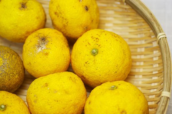 【無肥料・自然栽培】柚子(ゆず)1kg[愛媛県:はなきファーム]【v1000】