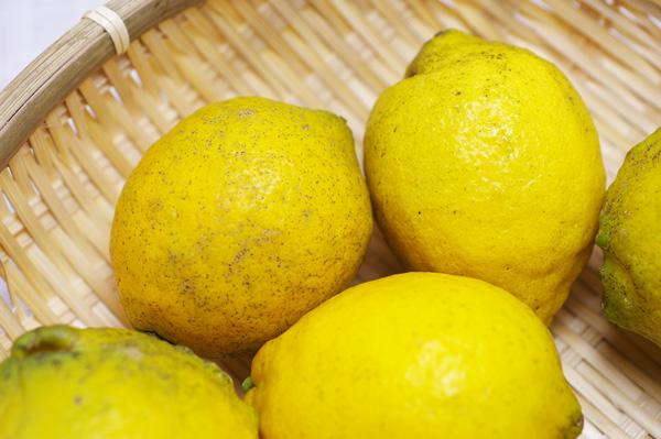 【無肥料・自然栽培】レモン1kg[広島県:国広自然栽培農園]【v1000】