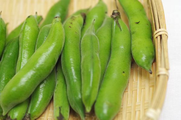 【無肥料・自然栽培】赤そら豆 約1kg[和歌山県:小林元]【v1000】
