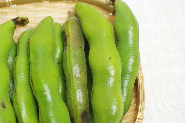 【無肥料・自然栽培】そら豆 約300g[徳島県:すばる農園]【v500】