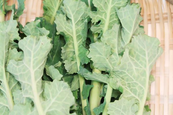 【無肥料・自然栽培】菜の花 春の訪れを告げるお野菜[和歌山県:小林元さん]
