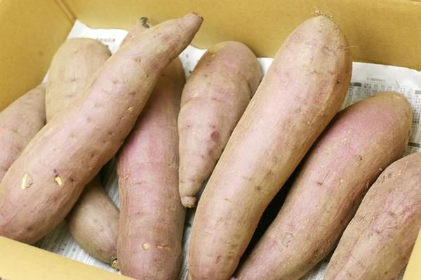 【無肥料・自然栽培】サツマイモ(紅はるか)[愛知県:棚宗サラダ農園]