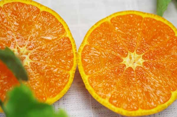 【無肥料・自然栽培】カラマンダリン3kg 長期樹上熟成オレンジのような春みかん[広島県:国広自然栽培農園]