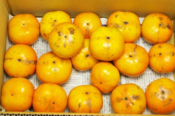 【無肥料・自然栽培】柿3kg(訳あり)[愛知県:なるせ農園]【10月28日(土)入荷分】