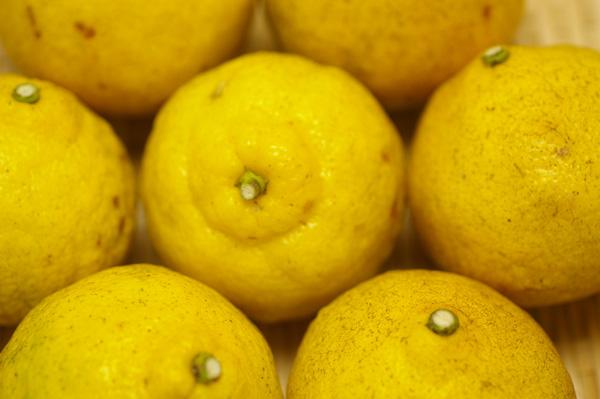 【無肥料・自然栽培】はるか1kg 酸味が少なく上品な甘さと爽やかな香りの春みかん[広島県:国広自然栽培農園]【v1000】