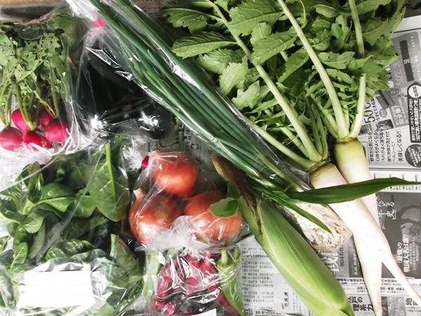 【無農薬・無化学肥料】元ちゃんファームの野菜セット[和歌山県:元ちゃんファーム]【産地直送】