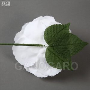 バラ Apolonia (アポロニア) (ホワイト系) [フラメンコ用][スペイン直輸入]