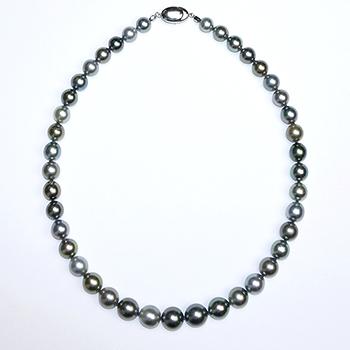 [黒蝶真珠マルチカラーネックレス] 照りの良いオシャレなネックレス