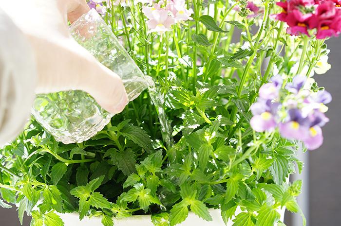 咲きMAX Gパワー 極限まで咲かせる圧倒的な液肥【メール便送料無料・時間指定・日付指定不可】