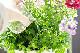 メール便送料無料/咲きMAX Gパワー 極限まで咲かせる圧倒的な液肥!