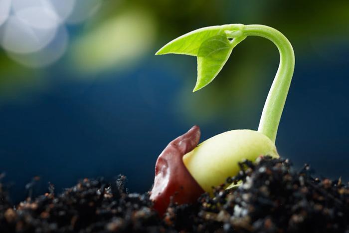 濃縮ゲキ力剤EX 植物のパフォーマンスを引き出す活力剤【メール便送料無料・時間指定・日付指定不可】