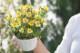 【送料無料】ジャメスブリテニア アラビアンナイト 3.5寸 6苗セット 珍しい お洒落 春 夏【メッセージカード・ラッピング不可】