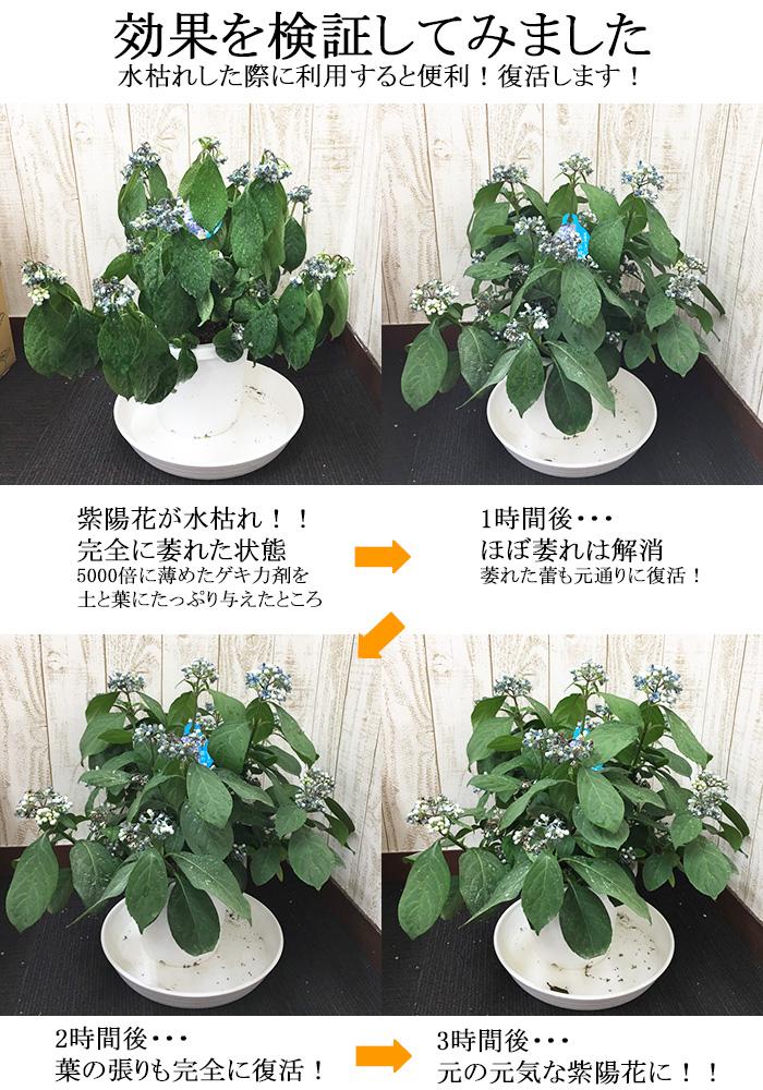 【お得な2本セット】濃縮ゲキ力剤EX 植物のパフォーマンスを引き出す活力剤【メール便送料無料・時間指定・日付指定不可】
