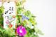 行灯仕立ての江戸朝顔(あさがお アサガオ)6号 1鉢 朝顔市の雰囲気をご自宅で!3〜4種寄せ植え【ラッピング・メッセージカード不可】【離島・沖縄配送不可】