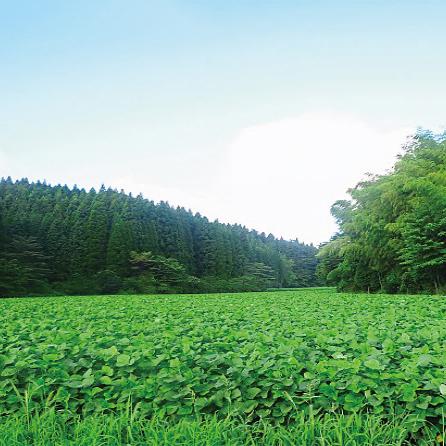 松合食品 天然醸造丸大豆しょうゆ(赤ラベル)