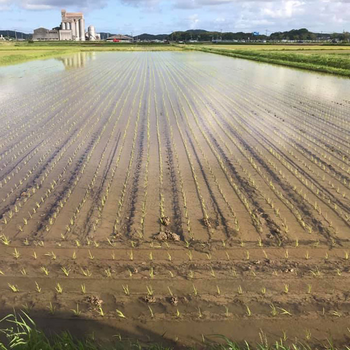 農業福島園の製菓用米粉 ミズホチカラ 1kg