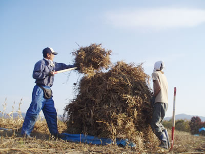 自然栽培・天日乾燥黒豆100%の黒豆きなこ