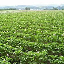 北海道産 片栗粉 無農薬・無肥料栽培じゃがいも100%使用