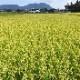 農業福島園の無農薬無化学肥料米 九州 福岡産  実りつくし 令和2年度産 5kg
