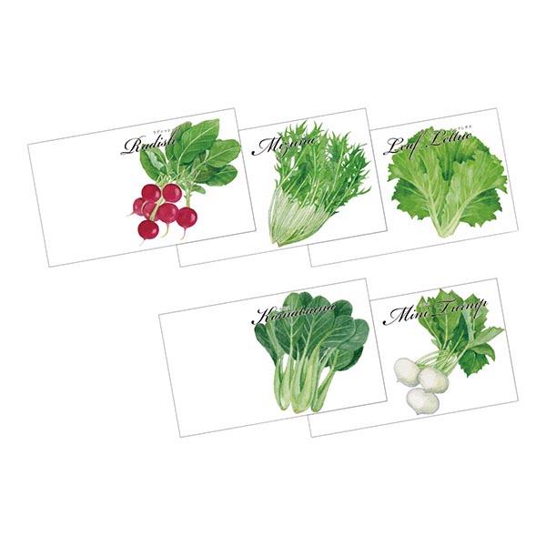 野菜の種子(横型) [指定不可]