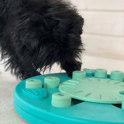 ニーナオットソン DOG WORKER  COMPOSITE NEW COLOR